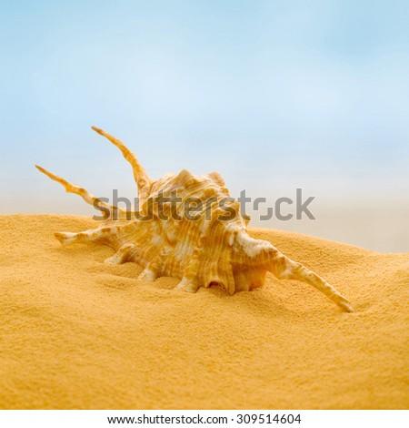 Sea shell on the beach. - stock photo