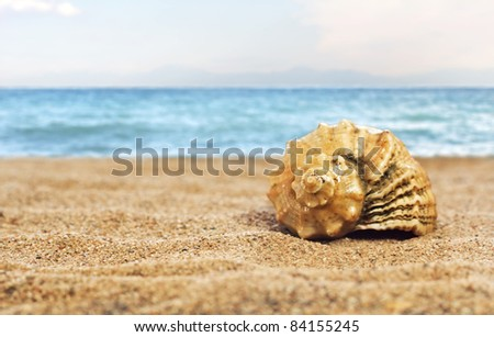 Sea shell on the beach background - stock photo