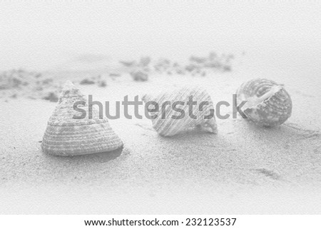 sea shell on the beach ,black ground color.