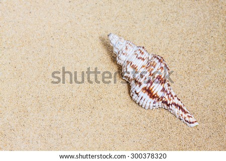 Sea shell  on the  sand  background,  vacations wallpaper.  - stock photo