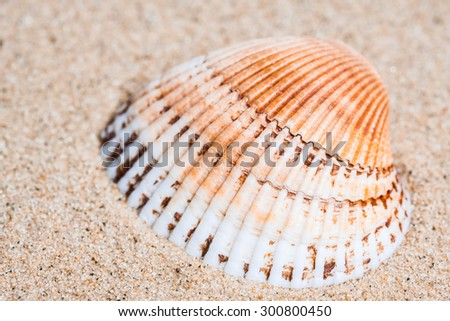 Sea  shell  on the  sand, ocean mood  background, vacations wallpaper.   - stock photo
