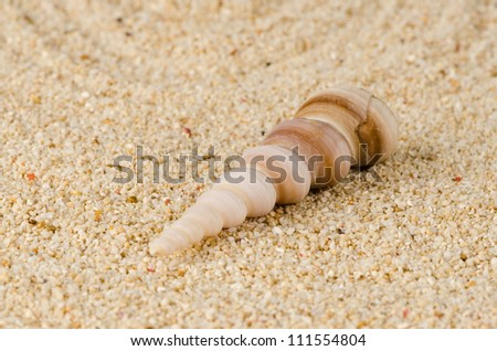 Sea shell on the shore sand background.