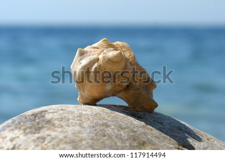 Sea shell on the stone