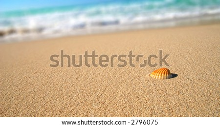 Sea shell on the tropical sandy beach in perfect natural harmony