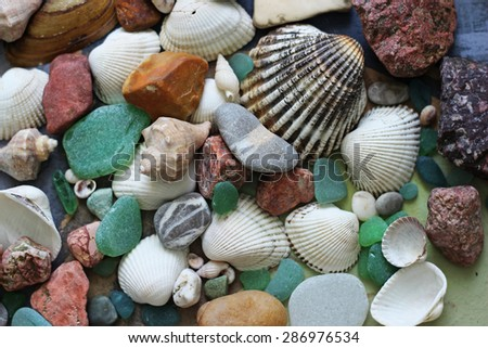 sea shell, stones, beach background