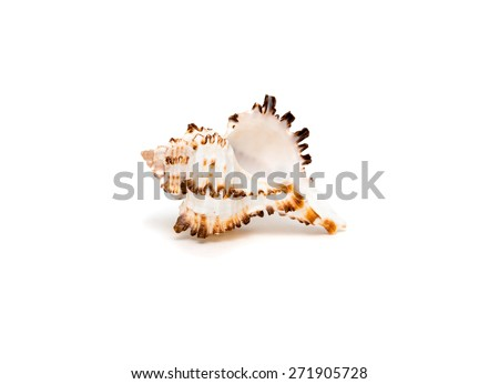 Sea shell with brown spikes isolated on white background - stock photo