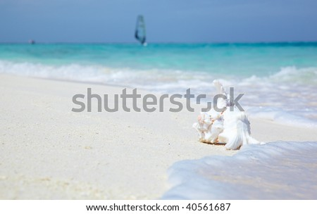 sea shell with ocean on background