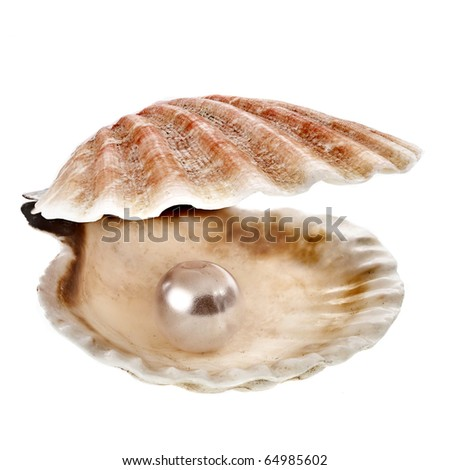 sea shell with pearl close up macro detail on white background