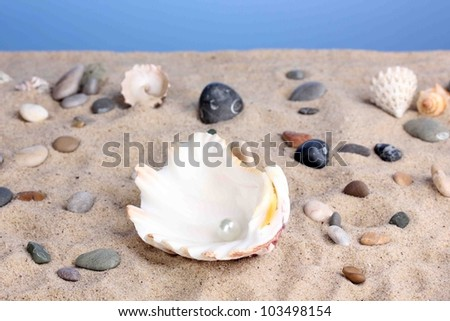 Sea shell with pearl on sand - stock photo