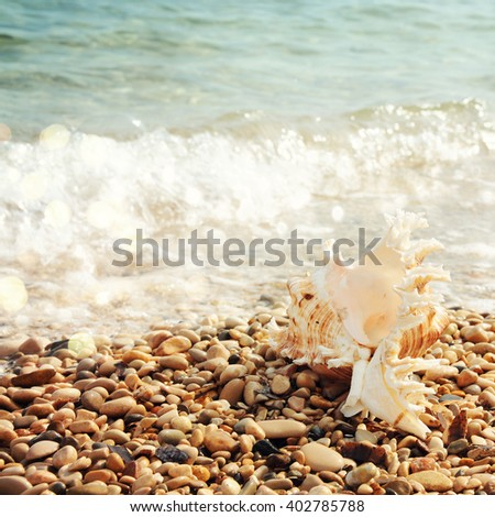sea shell with sea wave - stock photo