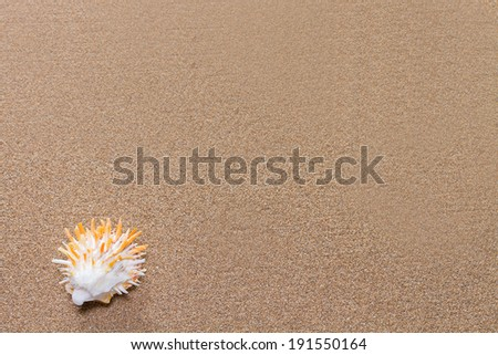 Sea shell with spikes on the sand on the beach - stock photo