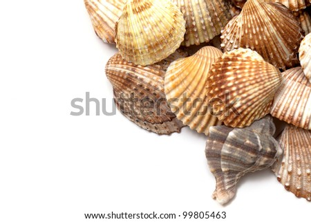 sea shells and empty space for your text