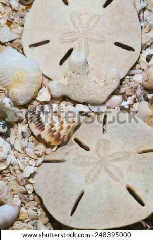 Sea shells and fossils on sand as background  - stock photo