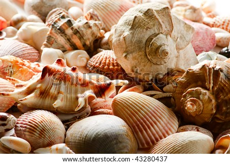 sea shells and pebble beach collection background - stock photo