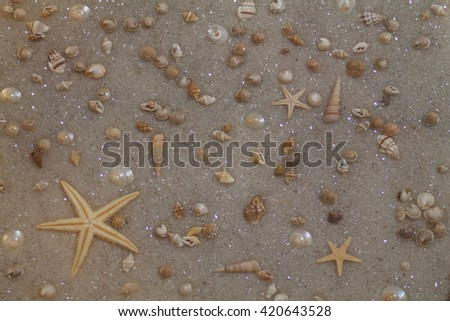 sea shells and starfish on sand as background - stock photo