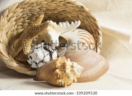 sea shells in a basket still life - stock photo