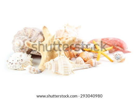 Sea shells isolated on a white