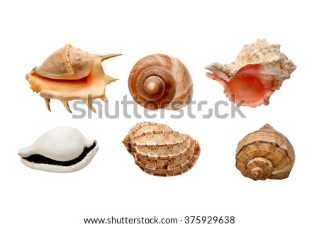 sea shells isolated on a white background in Flat composition - stock photo