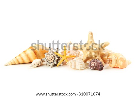Sea shells isolated on white - stock photo