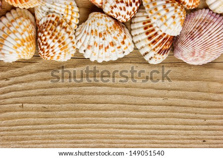 Sea shells on old wooden board