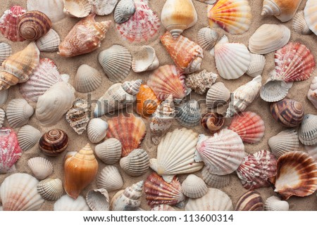 Sea shells on sand as background - stock photo