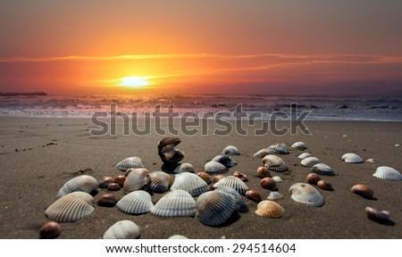 sea shells on sand background at dusk - stock photo