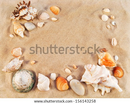 Sea shells on sand. Summer beach background. Backdrop for design. Top view. - stock photo