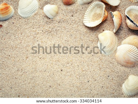 Sea shells on sand. Summer beach background. Top view. place for text - stock photo