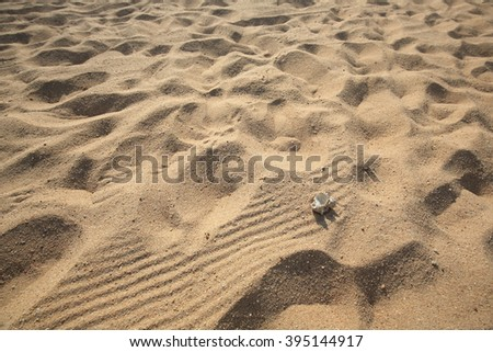 Sea shells on sand. Summer beach background with depth of field  with the sea