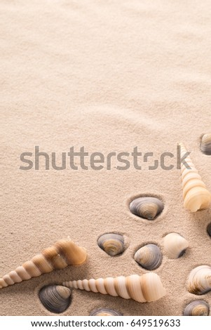 sea shells on sandy beach. Clams and spiral seashells ion sand background