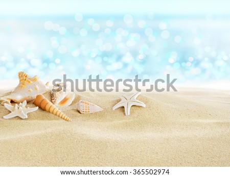 Sea shells on sunny beach - stock photo