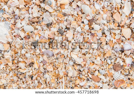 Sea shells on the beach.