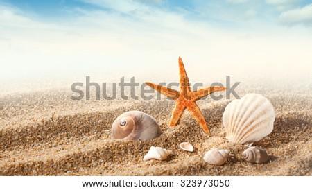 Sea shells on the sand against blue sky. Header for website - stock photo