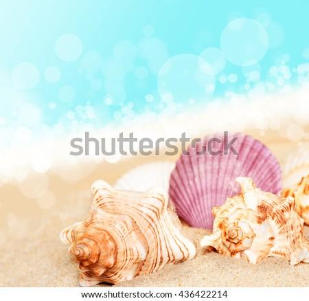 Sea shells on the sand at ocean background. Seashells. Summer beach.  Summer concept.  - stock photo