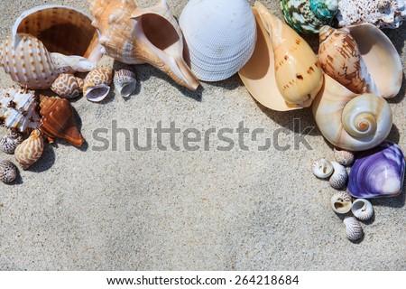 Sea shells on the sand in the beach near seaside - stock photo
