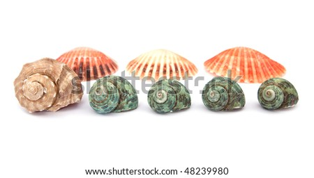 sea shells on white background