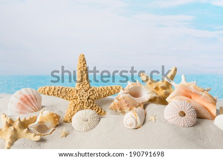 Sea shells parade in white sand on the beach - stock photo