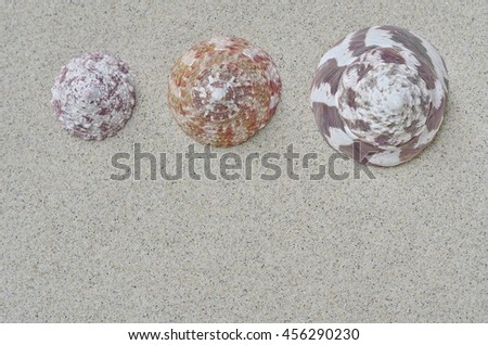 Sea shells, starfish and crab on beach sand for summer and beach concept. Studio shot beach background. - stock photo