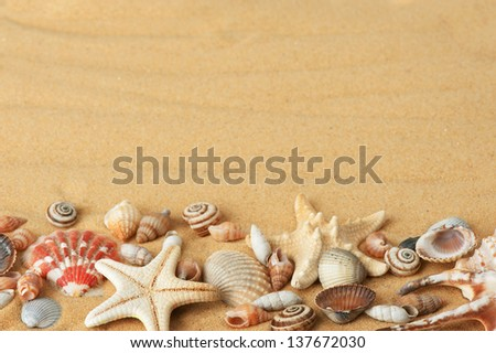 sea shells with sand - stock photo
