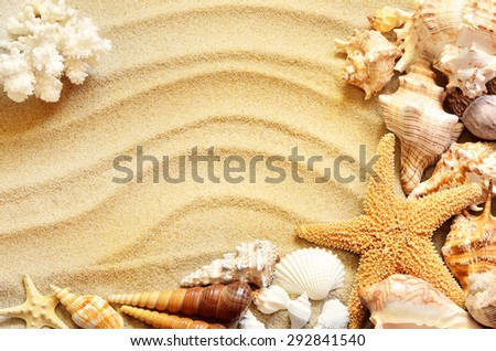 Sea shells with sand as background. Summer beach.