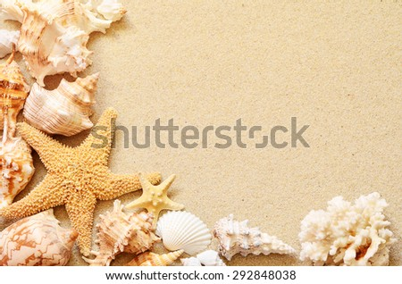 Sea shells with sand as background. Summer beach. - stock photo