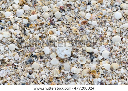sea shells with sand for background