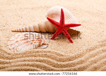 sea shells with sand. starfish in the beach - stock photo