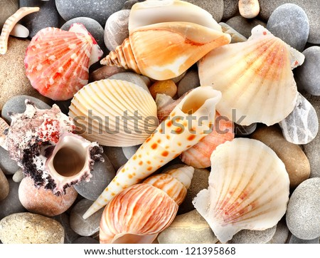 Sea shells with stone as background - stock photo