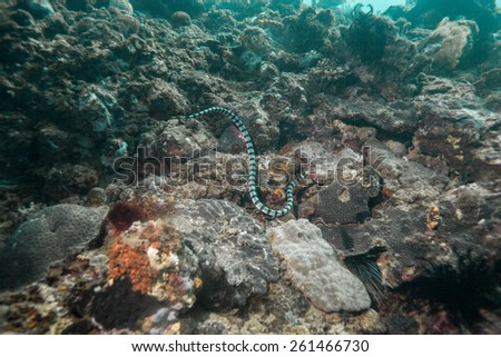 sea snake - stock photo