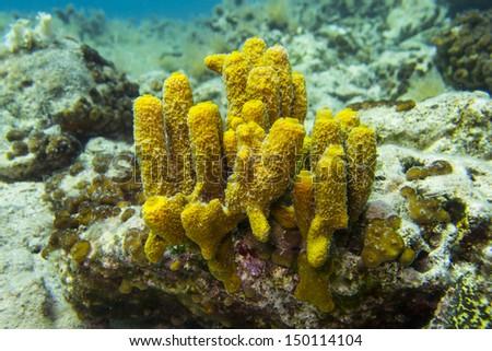 Sea sponge - stock photo