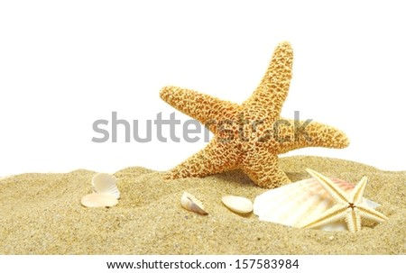 sea star and sand bank isolated on white background - stock photo
