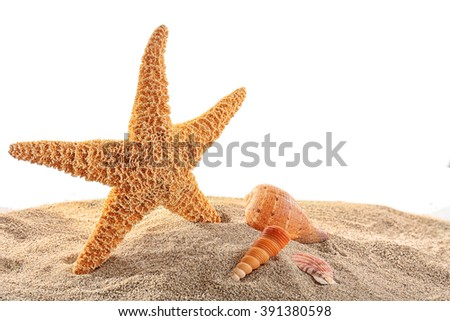 Sea star and shells isolated on white background - stock photo