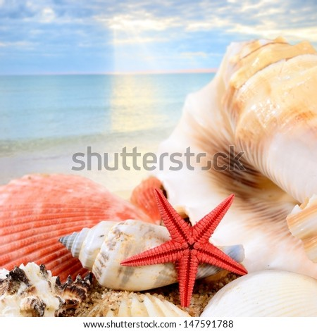 sea star and shells on the sandy beach against blue sea - stock photo