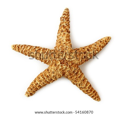Sea star isolated on white background - stock photo